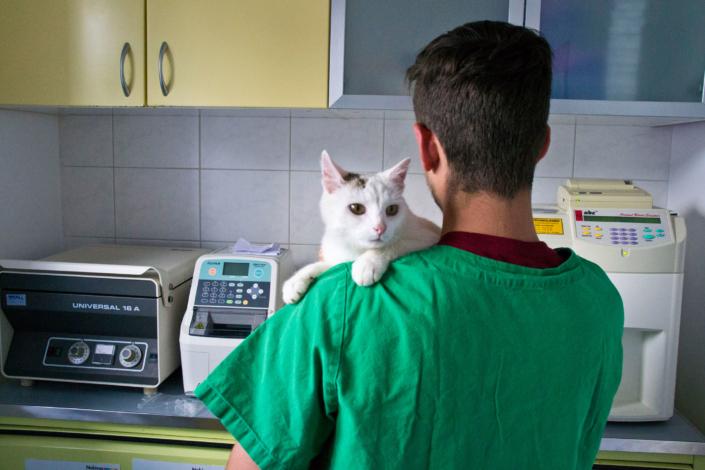 Labor für Kleintiere