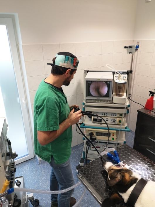 Endoskopie Kleintierpraxis