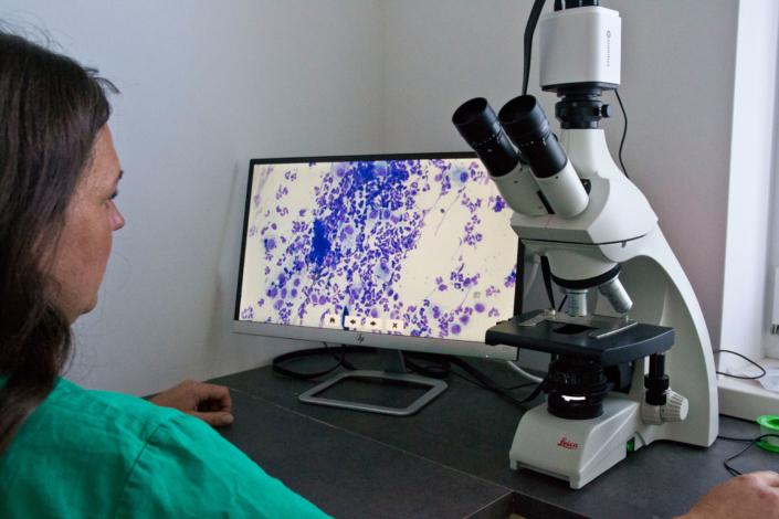 Labor Kleintierpraxis Gröbming